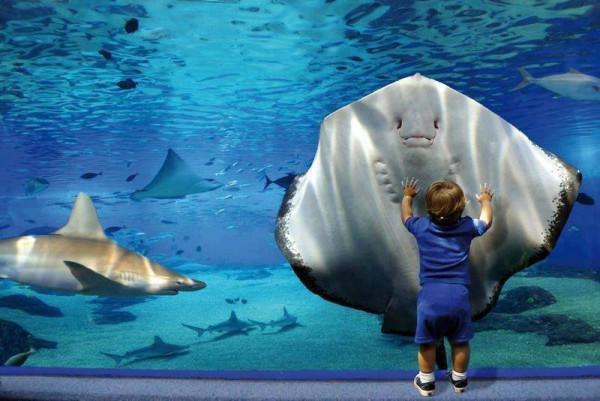 아기와 물고기.jpg